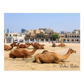 Camels in Doha Postcard