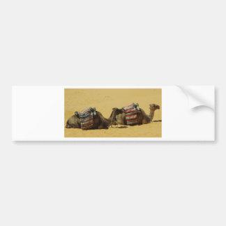 Camels in the desert bumper sticker