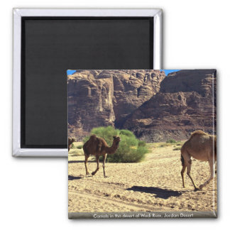 Camels in the desert of Wadi Rum, Jordan Desert Square Magnet