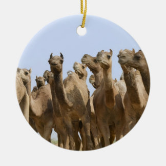 Camels in the desert, Pushkar, Rajasthan, India Christmas Ornament