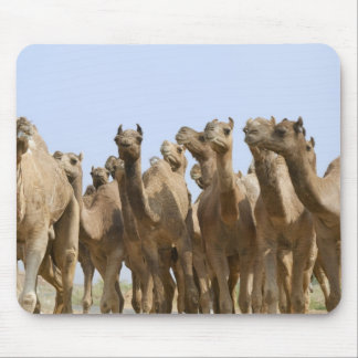 Camels in the desert, Pushkar, Rajasthan, India Mouse Mat