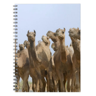 Camels in the desert, Pushkar, Rajasthan, India Notebook