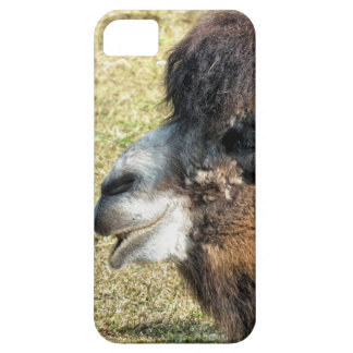 CAMELS iPhone 5 CASE