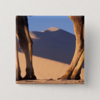 Camel's legs with sand dunes, Dunhuang, Gansu 15 Cm Square Badge