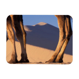 Camel's legs with sand dunes, Dunhuang, Gansu Magnet