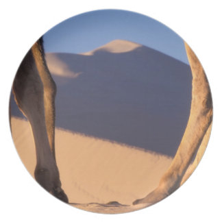 Camel's legs with sand dunes, Dunhuang, Gansu Plate