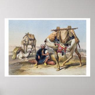Camels Resting in the Sherkiyeh, Land of Goshen, i Poster