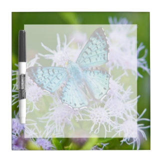 Cameron County, Texas. Blue Metalmark Dry Erase Board