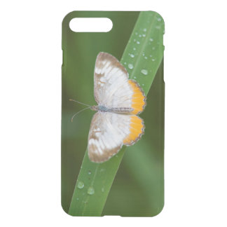 Cameron County, Texas. Common Mestra iPhone 8 Plus/7 Plus Case