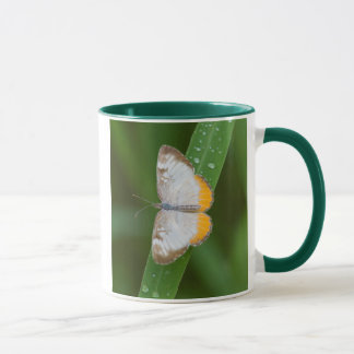 Cameron County, Texas. Common Mestra Mug