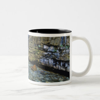 Cameron Falls in Waterton Lakes National Park in 2 Two-Tone Coffee Mug
