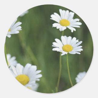 Camomiles Round Sticker