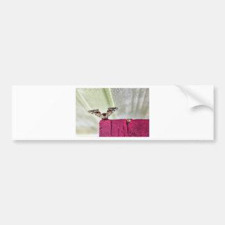 Camouflage moth bumper sticker
