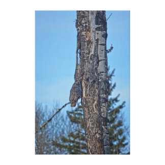 Camouflaged Great Grey Owl and Tree Wildlife Photo Stretched Canvas Prints