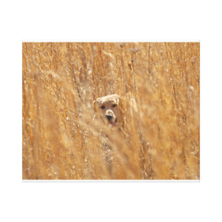 Camouflaged Yellow Labrador Retriever Stretched Canvas Print