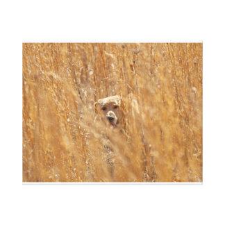 Camouflaged Yellow Labrador Retriever Gallery Wrap Canvas