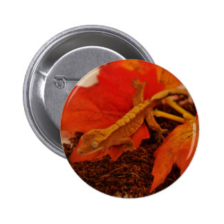 Camouflaging Crested Gecko 6 Cm Round Badge