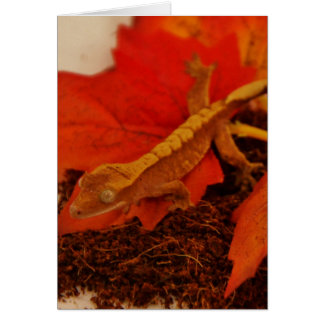 Camouflaging Crested Gecko Card