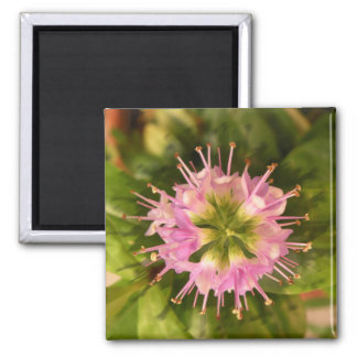 Campanitas photography of Flores Square Magnet
