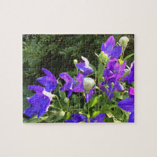Campanula Cluster (Blue Balloon Flowers) --- Jigsaw Puzzle
