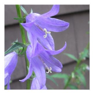 Campanula Garden Flower Custom Invite