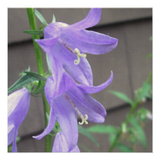 Campanula Garden Flower Custom Invites