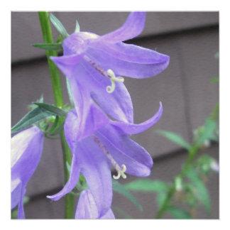 Campanula Garden Flower Invites