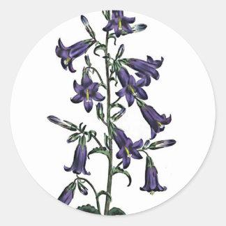 Campanula Sibirica Round Sticker