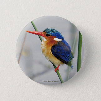 Can badge of kingfisher