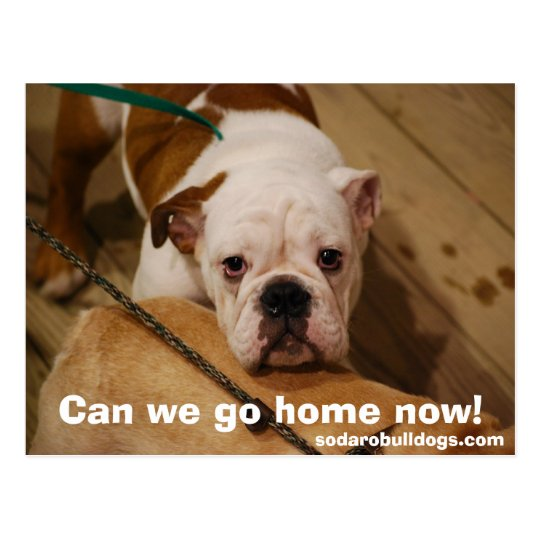 Can we go home now! postcard