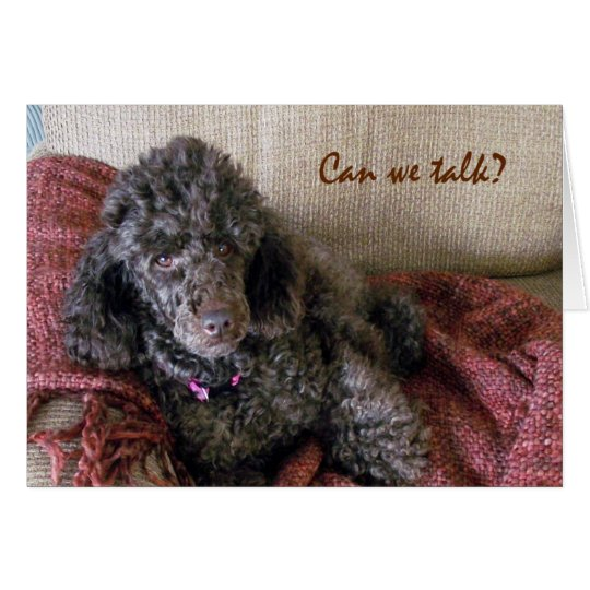 Can We Talk? Cute Brown Poodle and Blanket