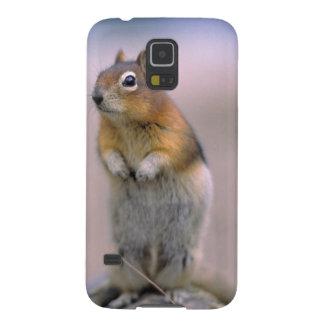 Canada, Alberta, Banff NP. A Golden-mantle Galaxy S5 Cases