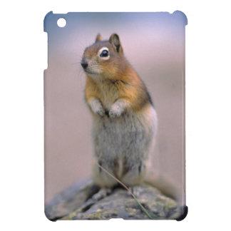 Canada, Alberta, Banff NP. A Golden-mantle iPad Mini Cases