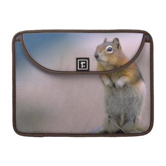 Canada, Alberta, Banff NP. A Golden-mantle Sleeve For MacBook Pro