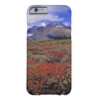Canada, Alberta, Banff NP. Huckleberries provide Barely There iPhone 6 Case