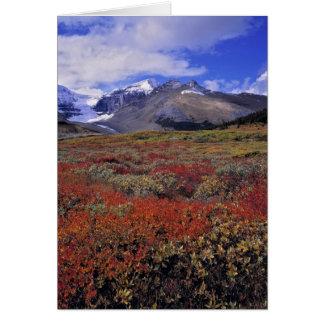 Canada, Alberta, Banff NP. Huckleberries provide Card