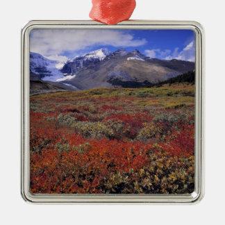 Canada, Alberta, Banff NP. Huckleberries provide Christmas Ornament