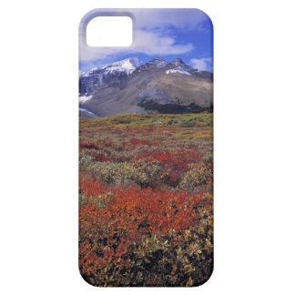 Canada, Alberta, Banff NP. Huckleberries provide iPhone 5 Covers
