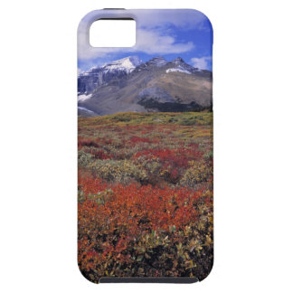 Canada, Alberta, Banff NP. Huckleberries provide Tough iPhone 5 Case