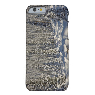 Canada, Alberta, Jasper National Park. Barely There iPhone 6 Case