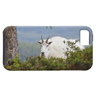Canada, Alberta, Jasper National Park, Mountain 3 Case For The iPhone 5