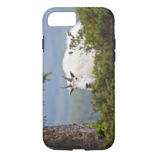 Canada, Alberta, Jasper National Park, Mountain 3 iPhone 8/7 Case