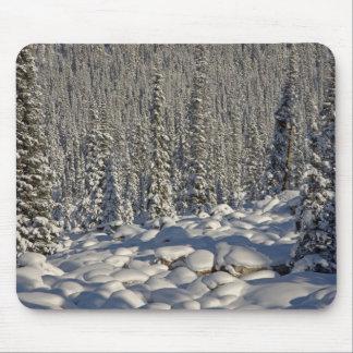 Canada, Alberta, Jasper National Park. Mouse Mat