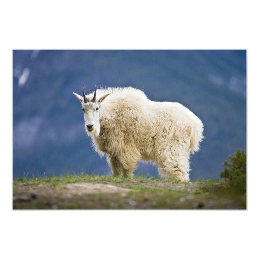 Canada, Alberta, Jasper National Park, Photo Print