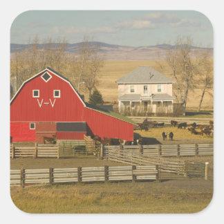 Canada, Alberta, Pincher Creek: Red Barn & Ranch Square Sticker