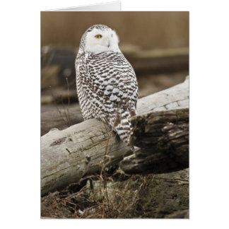 Canada, Boundary Bay, Snowy Owl Card