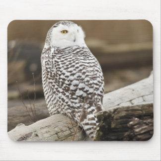 Canada, Boundary Bay, Snowy Owl Mouse Mat
