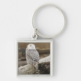 Canada, Boundary Bay, Snowy Owl Silver-Colored Square Key Ring