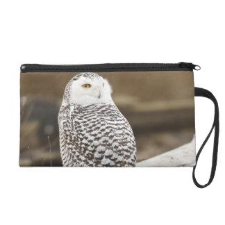 Canada, Boundary Bay, Snowy Owl Wristlet