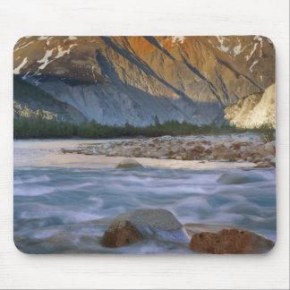 Canada, British Columbia, Alsek River Valley. Mouse Mat